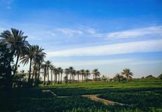 Malir Farm Evening 2017. Malir is the one of beautiful palce of Karachi Pakistan There Are Many Beautiful scenery Place In Malir And Stock Images