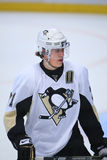 Malkin Stock Photography