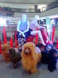 mall Fotografia de Stock Royalty Free