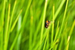 Mall beetle. Macro photo of a small beetle climbing up Stock Photo