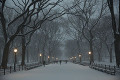 The Mall in Central Park Stock Images