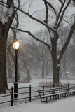 The Mall in Central Park Stock Photography