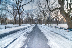The Mall in Central Park - NYC. Snow-covered Mall in Central Park - New York City Stock Images