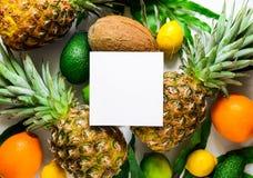 Mall för bakgrund för tropiska frukter för sommar Fotografering för Bildbyråer