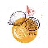 Mall för citrontappningdesign Botanisk illustration Inristade citroner bakgrund som tecknar den blom- gräsvektorn lemons lime royaltyfri illustrationer