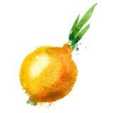 Mall för design för lökvektorlogo grönsaker eller royaltyfri illustrationer