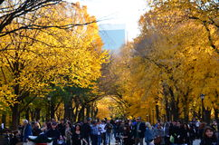 The Mall in Fall Stock Photos