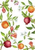 Mall med fruktträdfilialer, sidor, blommor och bär Royaltyfria Bilder