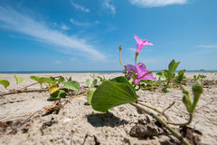 Mall pupil flowers on a beach with sea. In summer royalty free stock photos