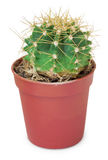 Ыmall round cactus in pot Stock Photo