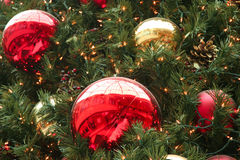 Mall Tree Detail Stock Photo