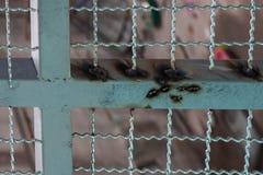 Malla de alambre de soldadura de la estructura de acero de la construcción Fotografía de archivo libre de regalías