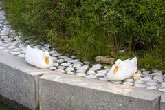 Mallard Anas platyrhynchos. Mallard - Anas platyrhynchos on the lake Lugano Royalty Free Stock Images