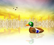 Mallard cartoon Royalty Free Stock Photo