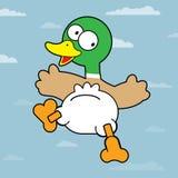 Mallard Duck. Cartoon Mallard Duck. Flying Mallard Duck. Illustration on blue background. Illustration of a cartoon mallard duck with green neck stock illustration