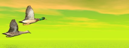 Mallard ducks flight - 3D render Royalty Free Stock Images