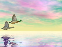 Mallard ducks flight - 3D render Stock Photography
