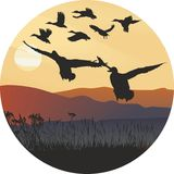Mallard ducks at sunrise and hilly landscape. Illustration of a circular arc of countries-flying wild ducks Stock Photos