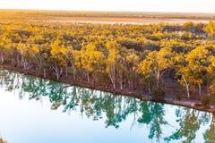 Mallee eukaliptusy odbija w spokój wodzie fotografia stock