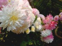 Mallika. Nature flower foodball graphics royalty free stock photo