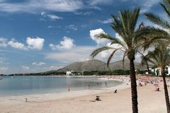 Mallorca beach in Alcudia. With palms Stock Image