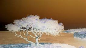 Mallorca Drzewny Negatywny obrazek Obrazy Stock