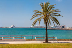 Mallorca embankment overlooking the cruise ships. View of the waterfront with a palm tree on a background of a cruise ship in Mallorca Royalty Free Stock Photos