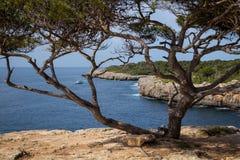 Mallorca, Hiszpania; Marzec 17, 2018: pi drzewo i zatoczka obraz royalty free