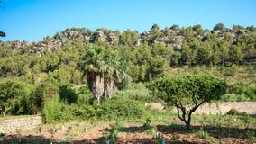 Mallorca, ilha Imagem de Stock Royalty Free