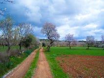Mallorca. Landscape Island Mallorca in Spring Royalty Free Stock Photos