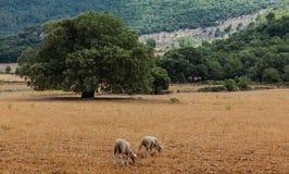 Mallorca-Landschaft Lizenzfreies Stockfoto