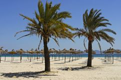 Mallorca (Majorca). Sunny beach with palm trees in Mallorca(Majorca Stock Image