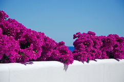 Mallorca Majorca, Balearic Island, Spanien Arkivfoto