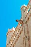 Palma, Mallorca, Majorca, Balearic Islands, Spain, gargoyle, La Seu, cathedral, church, decoration. Spiers and gargoyles on La Seu in Palma de Mallorca on June Royalty Free Stock Photography
