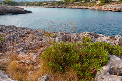 Mallorca Panoramic view on the bay with bush on foreground. Mallorca Panoramic view on the bay with bush Royalty Free Stock Photography