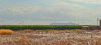 Mallorca rural Imagem de Stock