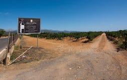 Jose L. Ferrer vineyard Stock Photography