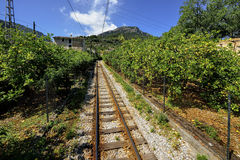 Mallorca, Spain, citrus gardens on the way to Port Sallor Stock Photos