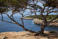 Mallorca, Spain; March 17, 2018: pi creek and tree. Sea and sky Royalty Free Stock Image