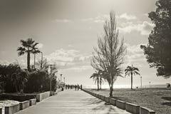 Mallorca spring backlight Royalty Free Stock Photo