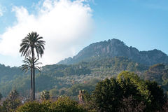 Mallorca winter landscape. Mallorca landscape with cloud topped mountains, palm trees and chimney smoke on a sunny winter morning in January Stock Photo