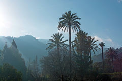 Mallorca winter landscape. Mallorca landscape with cloud topped mountains, palm trees and chimney smoke on a sunny winter morning in January Stock Images
