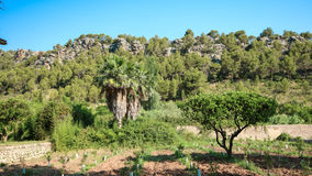 Mallorca, wyspa obraz royalty free