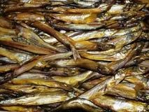 Malloto affumicato dei pesci. Immagine Stock Libera da Diritti