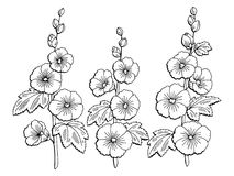 Mallow flower graphic black white isolated sketch illustration Royalty Free Stock Photos