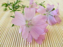 Mallow flowers. Bunch with common mallow flowers Stock Images