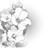 Mallow flowers in black and white Stock Photos