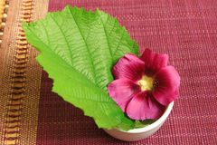 Mallow and leaf in spa. Green leaf and mallow flower in white bowl. Natural spa Stock Photography
