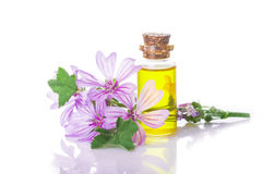 Mallow malva extract. Mallow extrac or essential oil in a little jar with malva flowers isolated on a white background Stock Images
