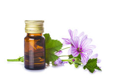 Mallow malva extract. Mallow extrac or essential oil in a little jar with malva flowers isolated on a white background Stock Photos